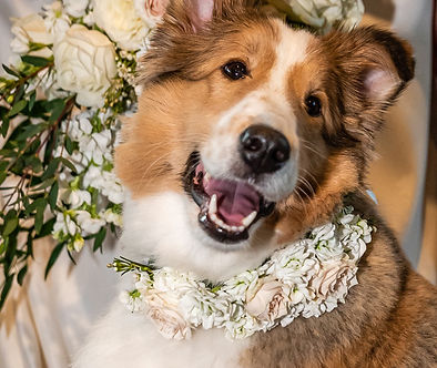 Held in the Moment Pic - Dog Florals.jpg