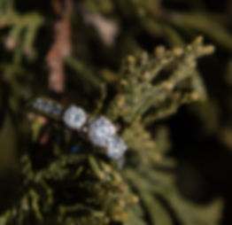 Engagement Ring on a branch