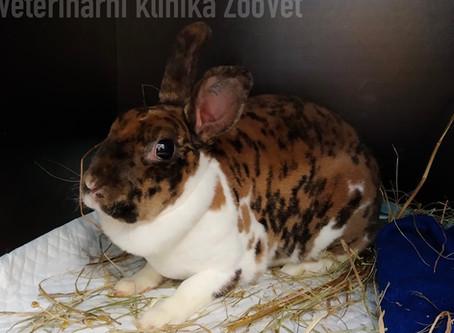 Manuál základní veterinární péče u králíka