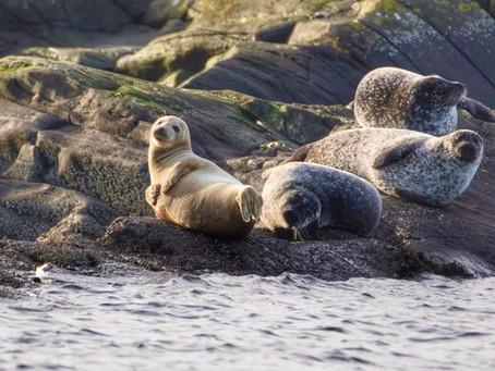 Sea Sensations in Argyll
