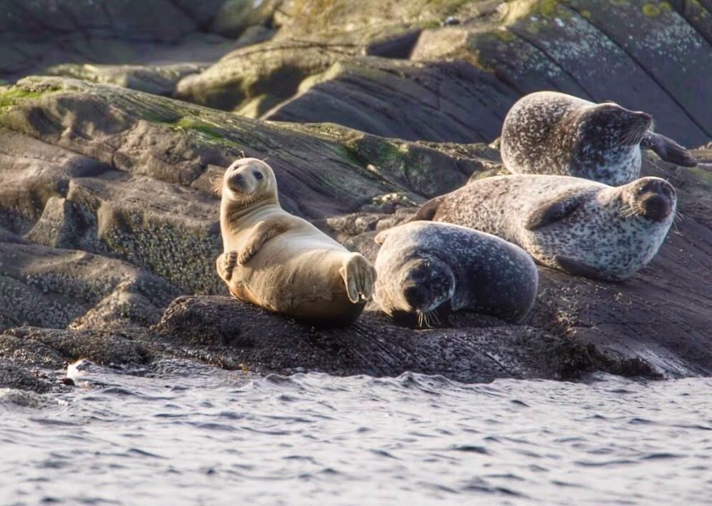 Seals on Loch Fyne