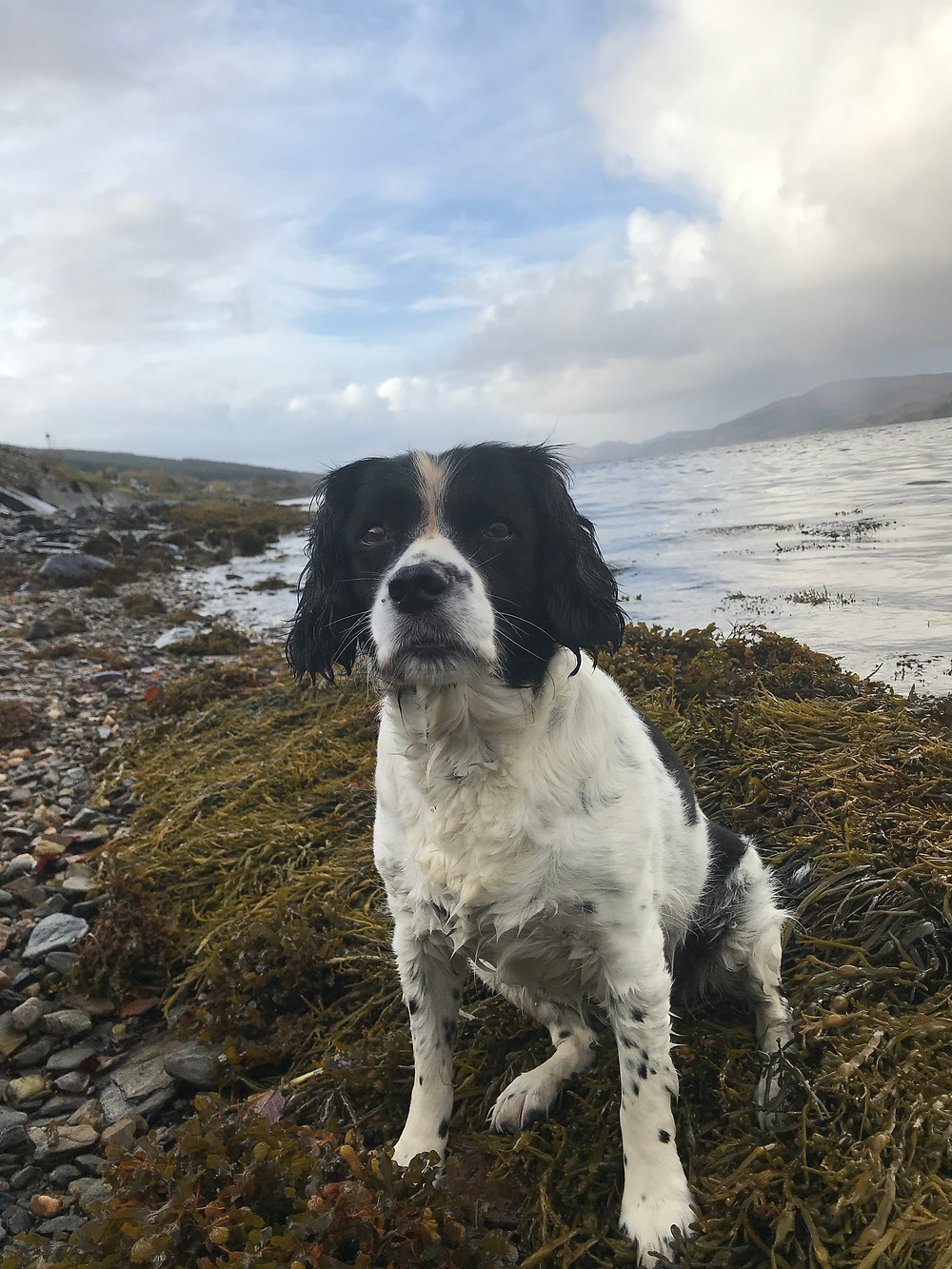 Crystal the reluctant sea dog