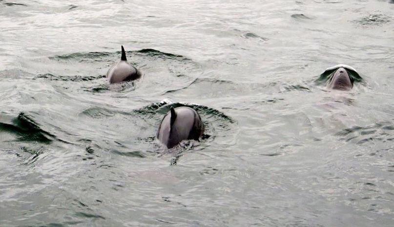 Spotting porpoises on Loch Fyne on our Argyll boat tours
