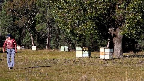 Keeping the bees humming