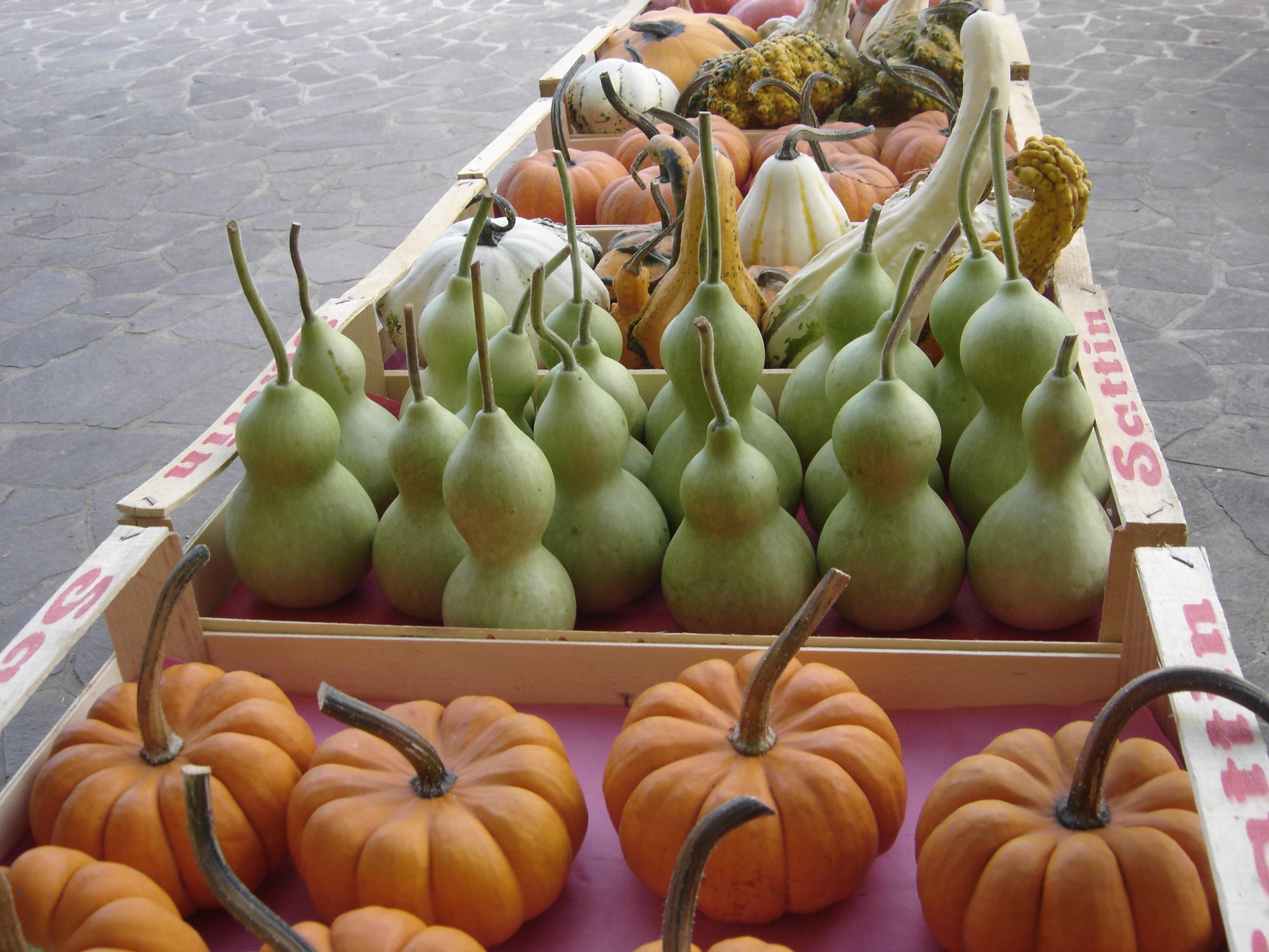 le nostre zucche ornamentali