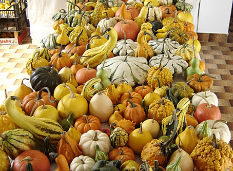 E' arrivato ottobre, il mese ideale per utilizzare le nostre zucche ornamentali come centrotavol