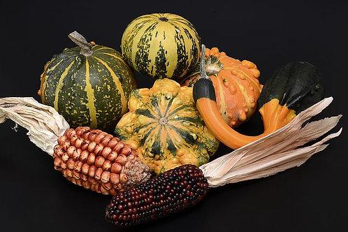 Composizione mista + 2 pannocchiete mais ornamentale