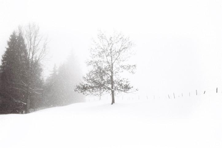 neige photo3.jpg
