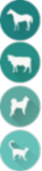 ostéopathe animaler