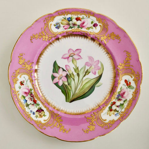 Coalport plate, pink and painted by William Cook, ca 1870