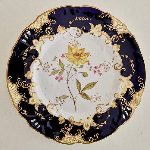 Samuel Alcock plate, Horn of Plenty moulding, flower study, ca 1840 (2)