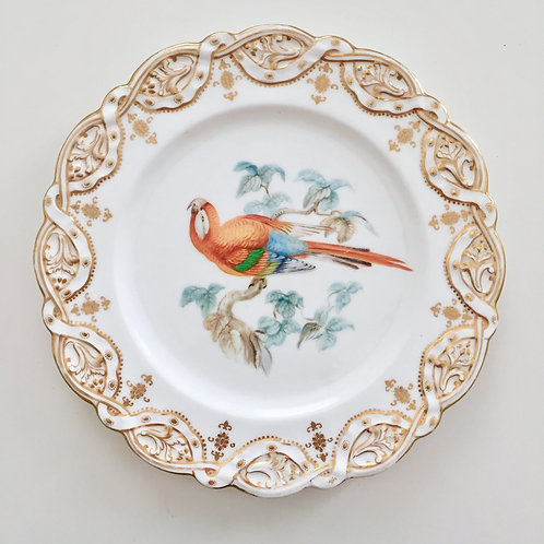Coalport cabinet plate, orange-blue parrot by John Randall, 1875-1880