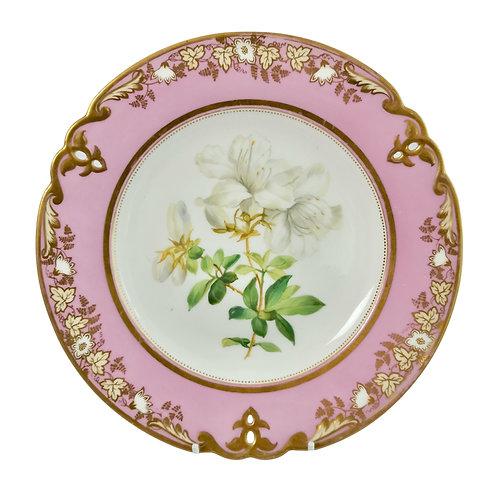 Dessert plate, Samuel Alcock, pink with white azalea, ca 1852 (2)