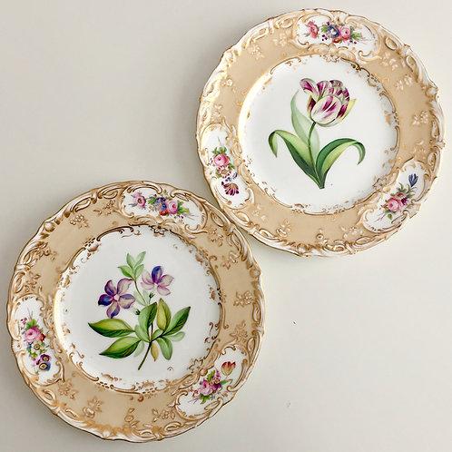 Set of 2 plates, superb botanical study, Coalport 1839-1845