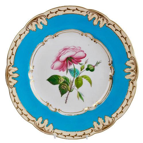 Coalport plate, bleu celeste with English rose, ca 1850 (1)