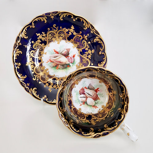 Coalport coffee cup and saucer, Adelaide shape with sea shells, ca 1840