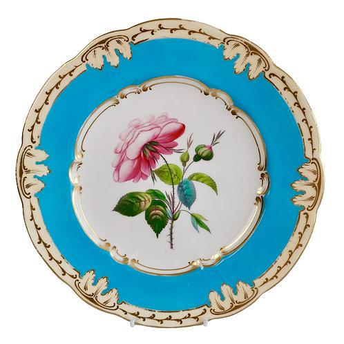 Coalport plate, bleu celeste with English rose, ca 1850 (2)