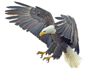 white-tailed-eagle-2015098_640.png
