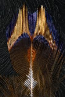 Plumages N°28