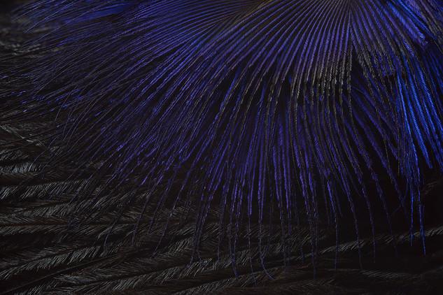 Plumages N°13