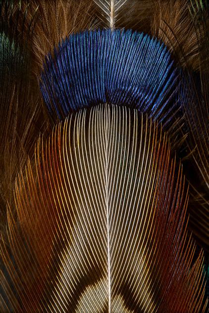 Plumages N°16