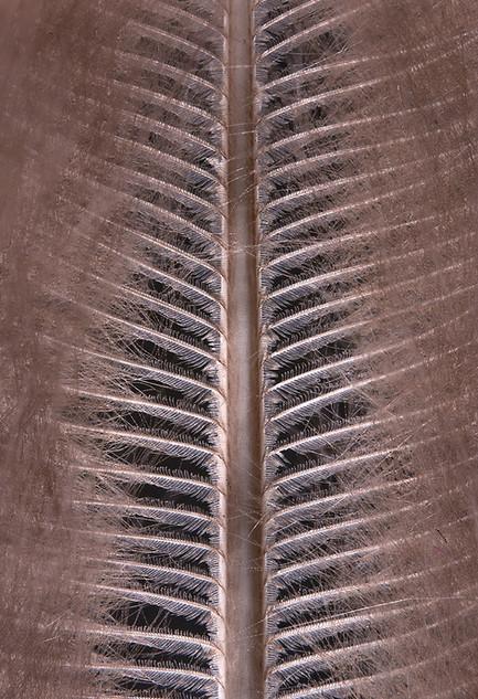 Plumages N°47
