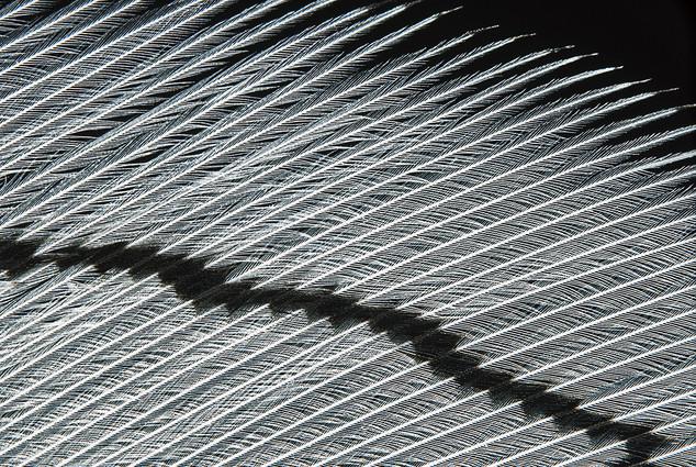 Plumages N°14