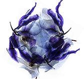 tête_florale_1w.jpg