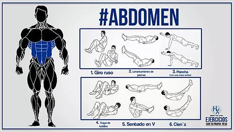 abdomen.png
