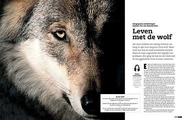 016-021-wolf-1909-1.jpg