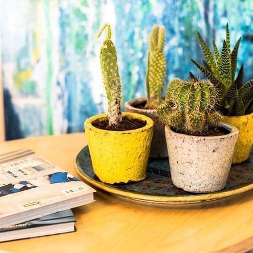 I 💛  socculents_🌵🌵🌵🌵🌵🌵🌵🌵🌵🌵🌵