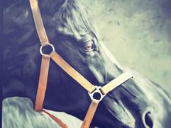 horse head.jpg
