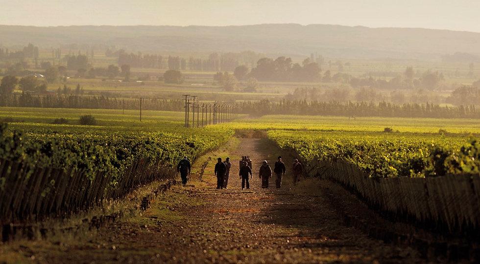 vineyard-workers.jpg