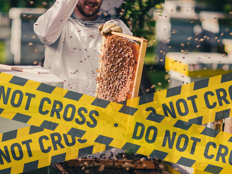 Save your hives from getting stolen – All you need to know about Hive Theft!