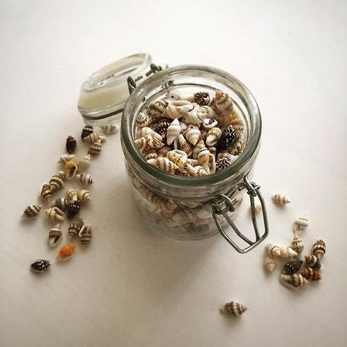 Mini coquillages