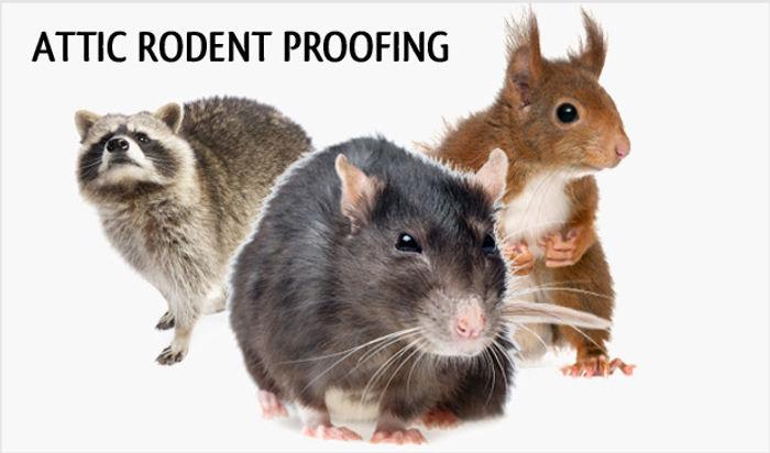 roddent_proofing_hero.jpg