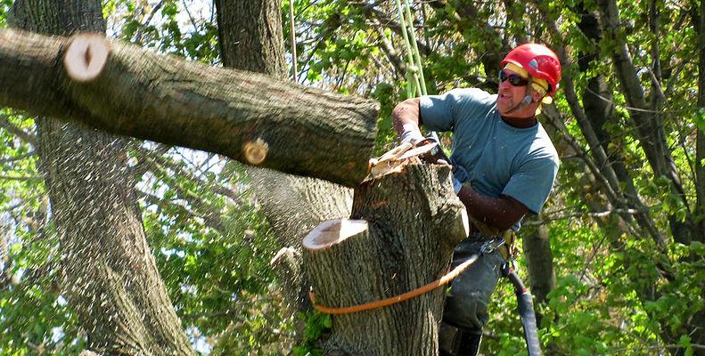 Broad+Ripple+Tree+Service+Climber+Removing+Tree.jpg