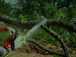 ricks_tree_service_img_012.jpg