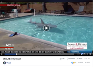 FOX 11 News - Animatronic Shark
