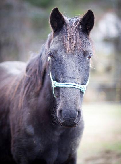 Elizabeth McCorvey Horse Dec 2018-Elizab