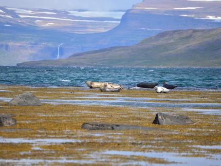 Hólmavík - Ísafjörður