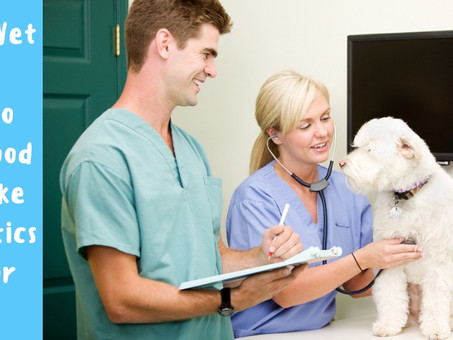 How Do Roundwood Vets Make Anesthetics Safe For Pets?