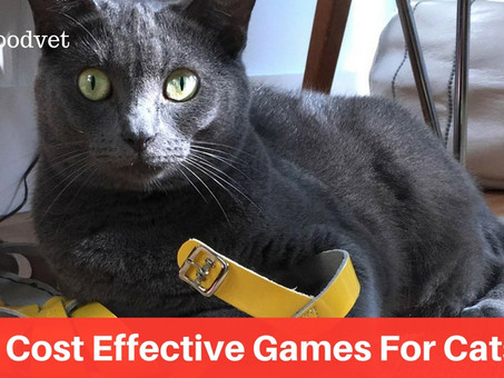 5 Playtime No-Nos With Your Cat & 5 Winning Games