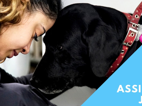 Meet The Team: Janice Our Veterinary Nurse Care Assistant