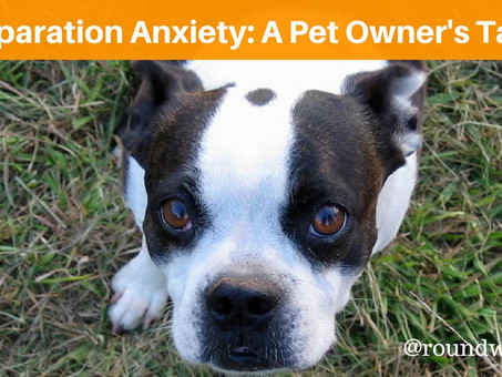 Seperation Anxiety: A Pet Owner's Tale