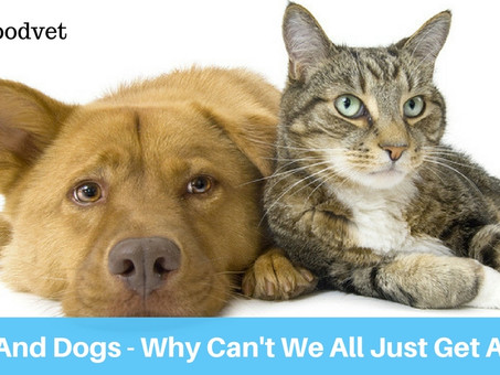 Cats And Dogs- Why Can't We All Just Get Along?