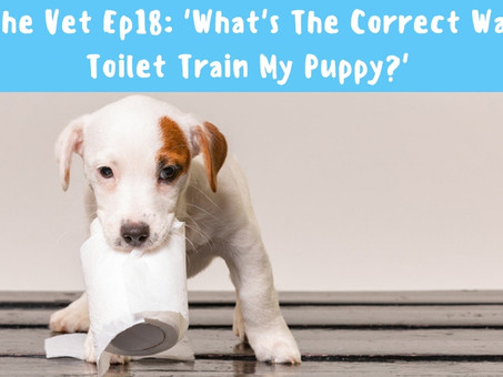 What's The Correct Way To Toilet Train My Puppy?