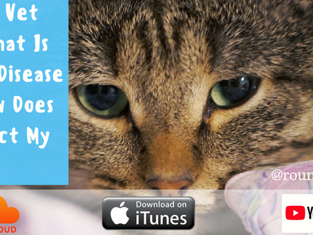 What Is Kidney Disease And How Does It Affect My Pet?
