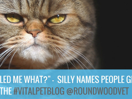5 Names To Avoid Calling Your Pet