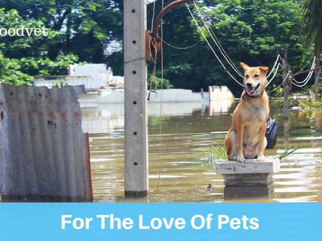 For The Love Of Pets- Martyrs of Katrina Gave Lives For Harvey's Cats And Dogs